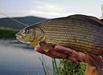 ribolov na rijeci Gackoj - Hotel Park Exclusive Otočac